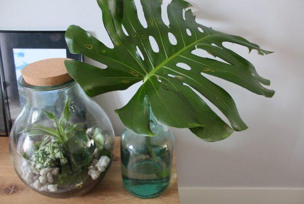 woonaccessoires plant